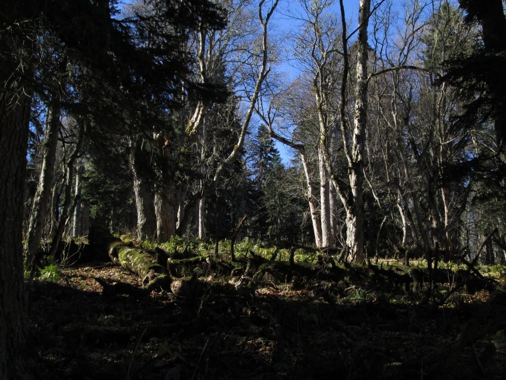 Лес Пантерного хребта