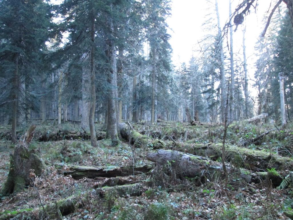 Лес у реки Гефо