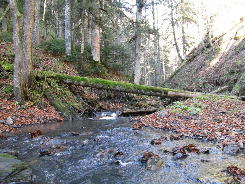 Река Гефо. Место где она впадает в реку Киша.