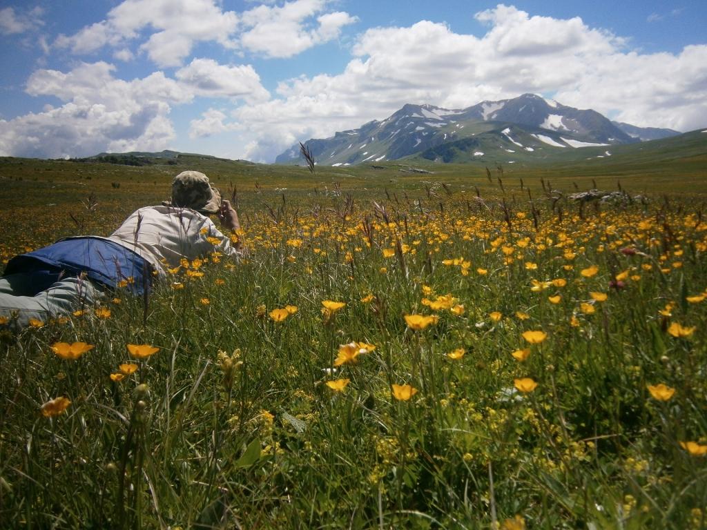 Валяясь в цветочках, фото горы Оштен