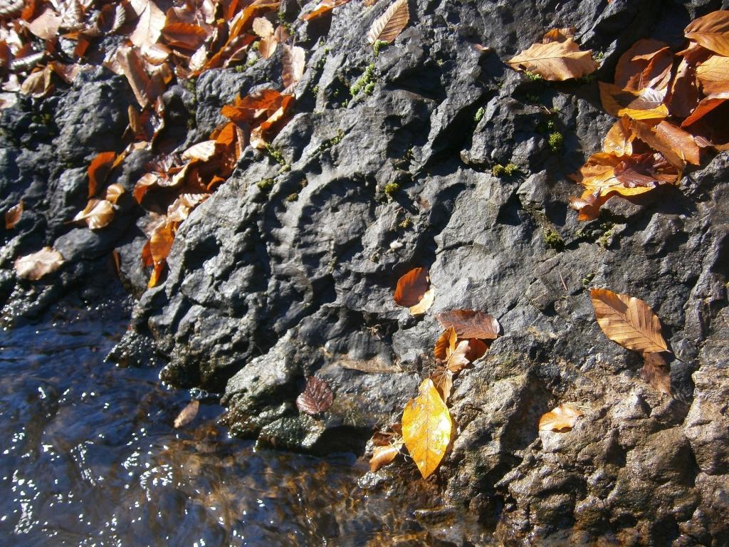остатки древних окаменелостей.